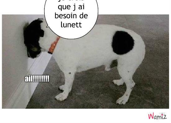 chien , lolcats réalisé sur Wamiz
