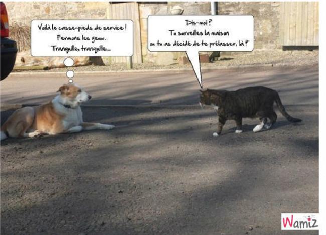 chien chat , lolcats réalisé sur Wamiz