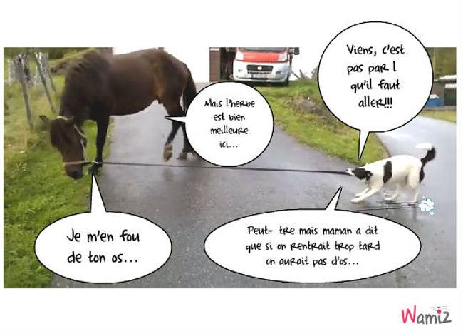 chien et cheval... herbe et os!, lolcats réalisé sur Wamiz