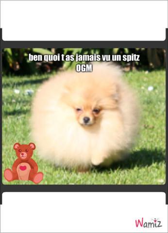 chien fourure OGM , lolcats réalisé sur Wamiz