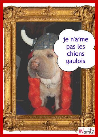 chien gaulois, lolcats réalisé sur Wamiz