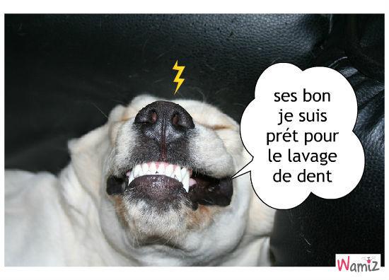 chien lavage de dent , lolcats réalisé sur Wamiz