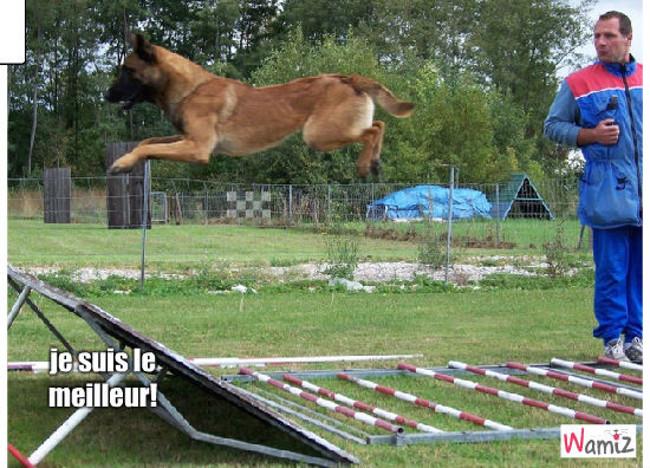 chien sauteur, lolcats réalisé sur Wamiz