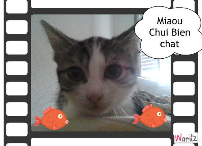 Chui Bien Chat, lolcats réalisé sur Wamiz