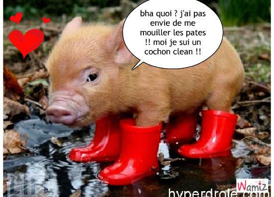 cochon clean !, lolcats réalisé sur Wamiz