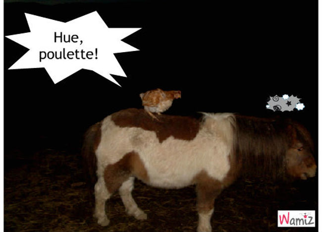 Cocotte, lolcats réalisé sur Wamiz