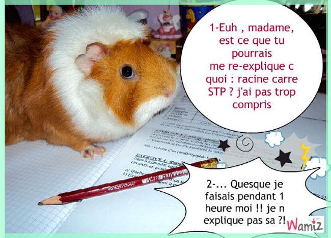 Comic etudiant hamster, lolcats réalisé sur Wamiz