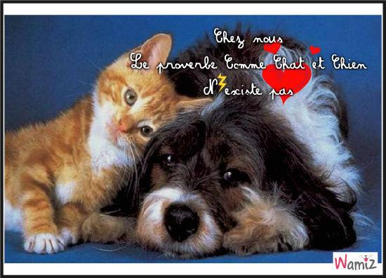 Comme chat et chien. Proverbe ne disant pas toujours la vérité, lolcats réalisé sur Wamiz