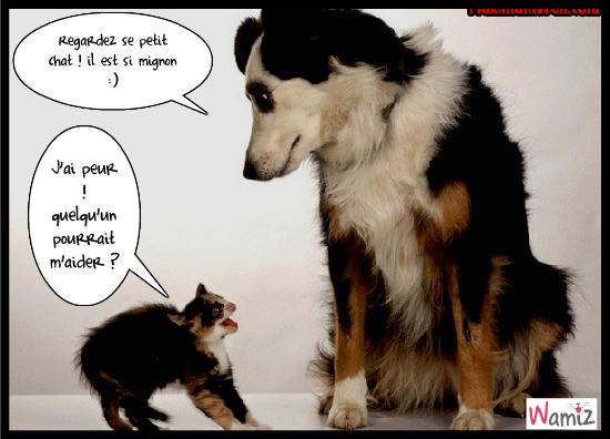 Forum qu bec concours chantillons gratuits concours - Photo de chien et chat mignon ...
