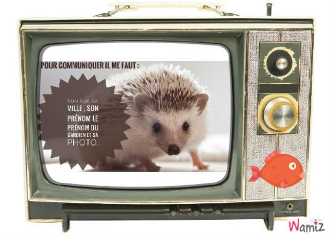 Communication animale, lolcats réalisé sur Wamiz