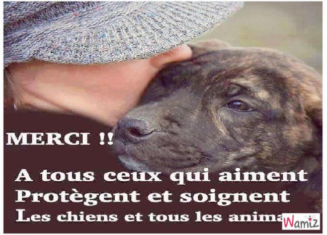 Compassion animale, lolcats réalisé sur Wamiz