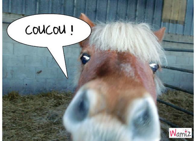 COUCOU, lolcats réalisé sur Wamiz