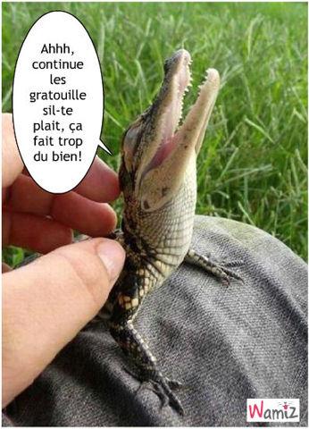 Le Rumbelle - Page 3 Crocodile-calin-90729