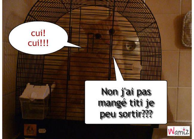 Dans ta cage, lolcats réalisé sur Wamiz