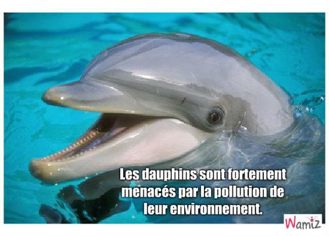 dauphins, lolcats réalisé sur Wamiz
