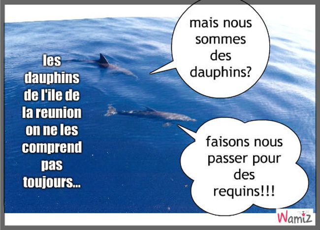 dauphins dolphine, lolcats réalisé sur Wamiz