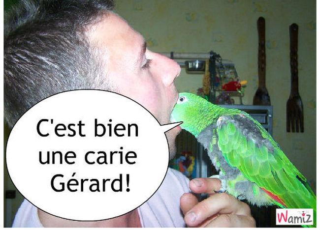 docteur oiseaux, lolcats réalisé sur Wamiz