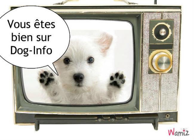 Dog-Info, lolcats réalisé sur Wamiz