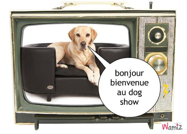 dog show, lolcats réalisé sur Wamiz