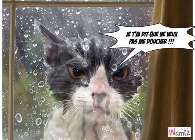 Douche dehors, lolcats réalisé sur Wamiz
