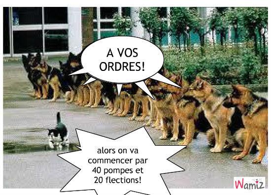 Bekannt lol : tooniz, bande dessinée (BD) et photo personnalisée d'animaux  OY71