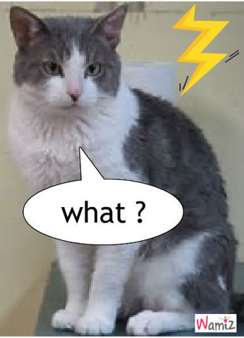 drole de chat, lolcats réalisé sur Wamiz