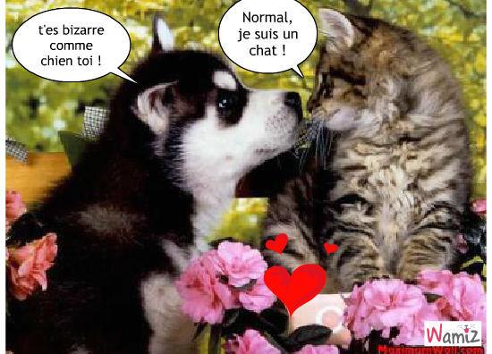 """Résultat de recherche d'images pour """"image drole de chat et chien"""""""
