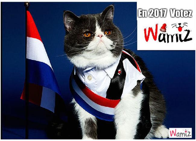 Elections 2017, lolcats réalisé sur Wamiz