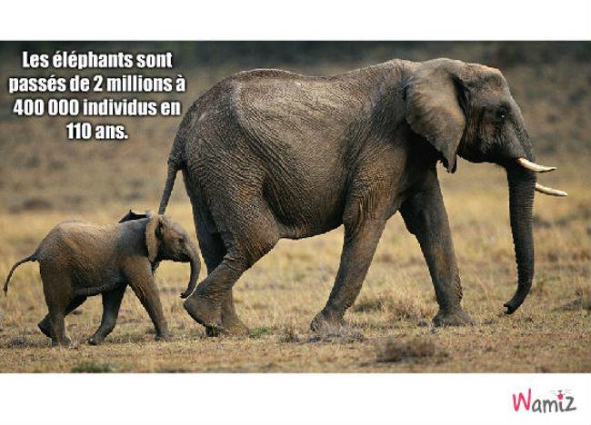 éléphants, lolcats réalisé sur Wamiz