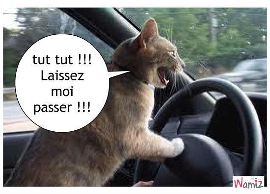 En voiture toute !!!, lolcats réalisé sur Wamiz