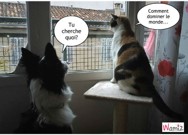 entre chiens et chats, lolcats réalisé sur Wamiz