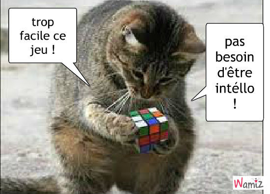 http://static.wamiz.fr/images/comics/stuffed/large/et-un-jeu-facile-meme-pour-un-chat-51238.jpg