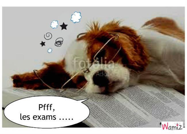 Examens pour chiens, lolcats réalisé sur Wamiz