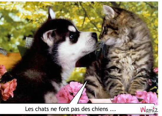 Tooniz de chupa bande dessin e bd et photo personnalis e d 39 animaux wamiz - Les chiens ne font pas des chats ...