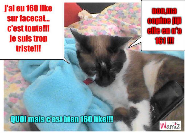 facecat = facebook, lolcats réalisé sur Wamiz