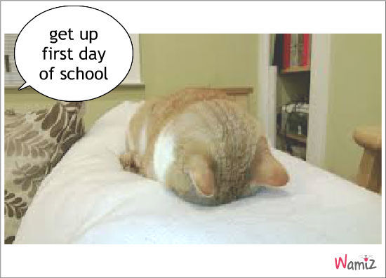 first day of school, lolcats réalisé sur Wamiz