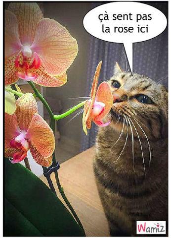Fleur, lolcats réalisé sur Wamiz