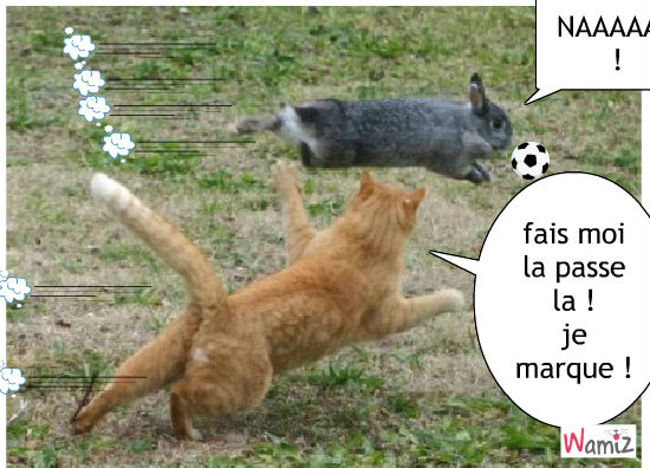 foot ! lapin et chat !, lolcats réalisé sur Wamiz