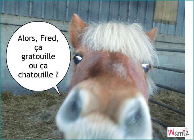 Fred, lolcats réalisé sur Wamiz