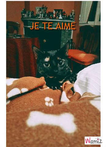gato, lolcats réalisé sur Wamiz