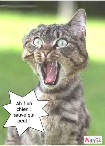 Chats et chiens rigolos - Photo chat marrant ...
