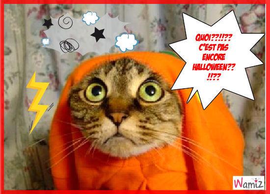 Halloween lolcat - Image halloween drole ...