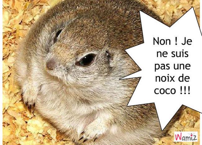 hamster coco, lolcats réalisé sur Wamiz