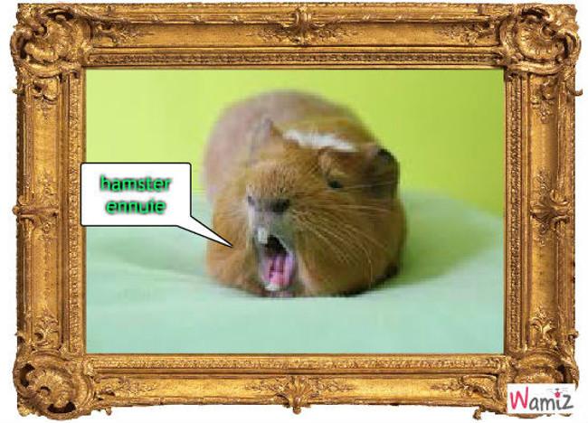 hamster qui s'enmèrde, lolcats réalisé sur Wamiz