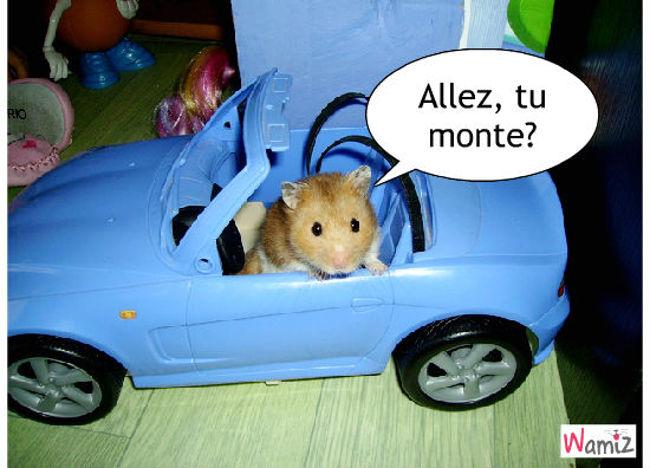 Hamster roulant, lolcats réalisé sur Wamiz