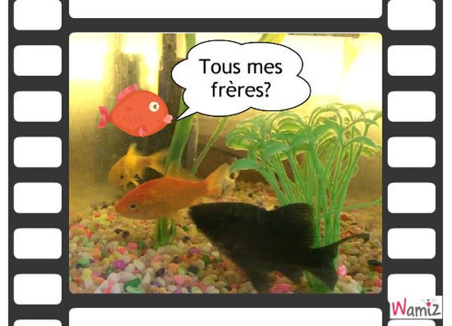 Hermanos peces, lolcats réalisé sur Wamiz