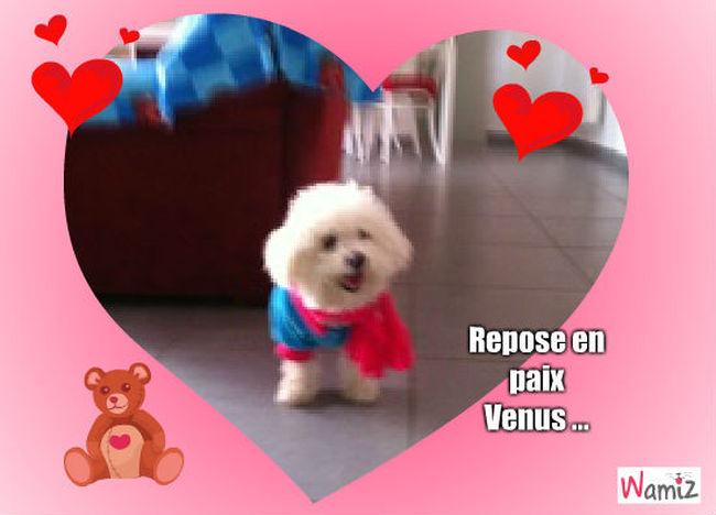 Homage pour Venus petite chienne de Missouvia ... , lolcats réalisé sur Wamiz