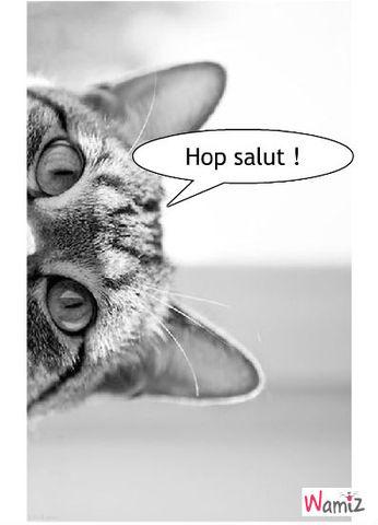 Hop Hop , lolcats réalisé sur Wamiz