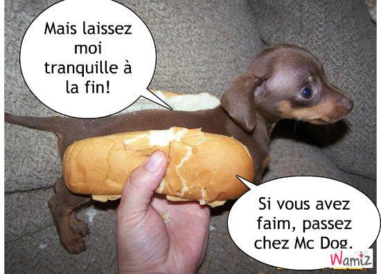 Hot Dog, lolcats réalisé sur Wamiz