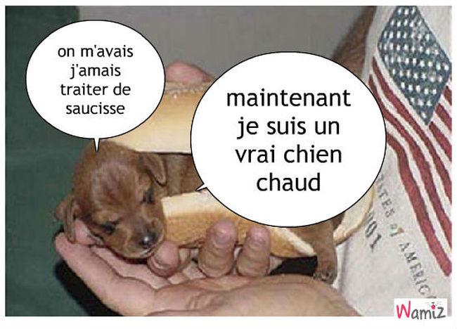 Hot dog , lolcats réalisé sur Wamiz